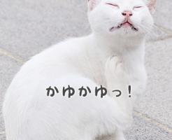 kayumi2